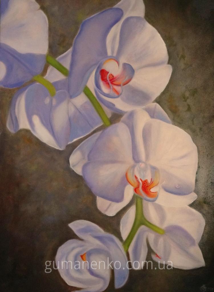 "Картина ""Орхидея"", холст 50х70 см., масло."